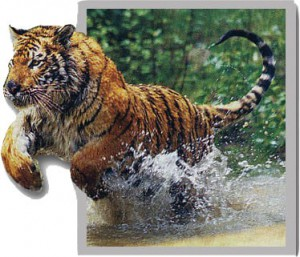 Tiger-popout